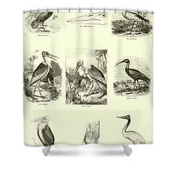 Page From The Pictorial Museum Of Animated Nature  Shower Curtain by English School