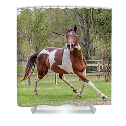 Paint Mare In Field Shower Curtain by Gwen Vann-Horn