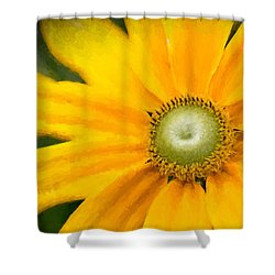 Painted Daisy Shower Curtain