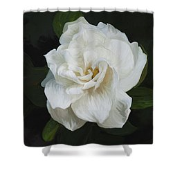 Shower Curtain featuring the photograph Painted Gardenia by Phyllis Denton