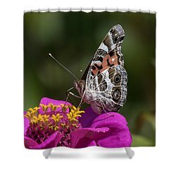 Shower Curtain featuring the photograph Painted Lady by David Lester