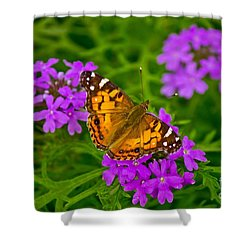 Painted Lady On Purple Verbena Shower Curtain