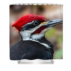 Painted Pileated Woodpecker Shower Curtain by John Haldane