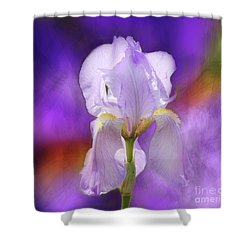 Painted Purple Iris Shower Curtain
