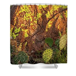 Painted Rock Shower Curtain by Iris Greenwell