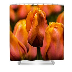 Shower Curtain featuring the photograph Painted Tulips 2 by Jay Stockhaus