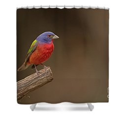 Painting The Hill Country Shower Curtain