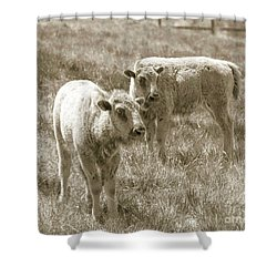 Shower Curtain featuring the photograph Pair Of Baby Buffalos by Rebecca Margraf