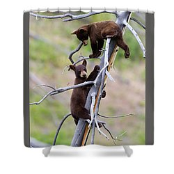 Pair Of Bear Cubs In A Tree Shower Curtain