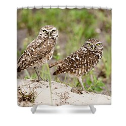 Pair Of Burrowing Owls Shower Curtain