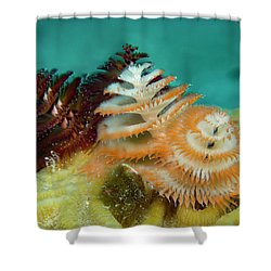Pair Of Christmas Tree Worms Shower Curtain by Jean Noren