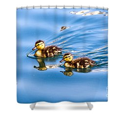 Shower Curtain featuring the photograph Duckling Duo by Kate Brown