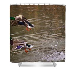 Pair Of Ducks Shower Curtain