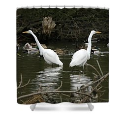 Shower Curtain featuring the photograph Pair Of Egrets by George Randy Bass
