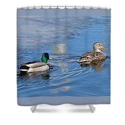 Shower Curtain featuring the photograph Pair Of Mallard Ducks Inthunder Bay by Michael Peychich