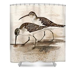 Pair Of Sandpipers Shower Curtain