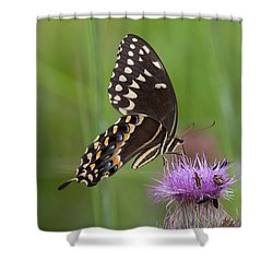 Palamedes Swallowtail And Friends Shower Curtain
