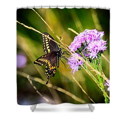 Palamedes Swallowtail Shower Curtain