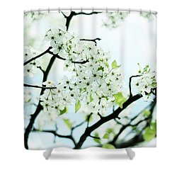 Shower Curtain featuring the photograph Pale Pear Blossom by Jessica Jenney