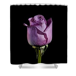 Pale Purple Rose Shower Curtain