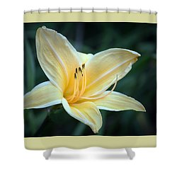 Pale Yellow Day Lily Shower Curtain