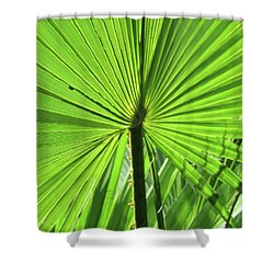 Shower Curtain featuring the photograph Palm Frond by Bonnie Muir