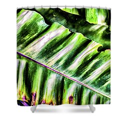 Palm Fronds Up Close Shower Curtain