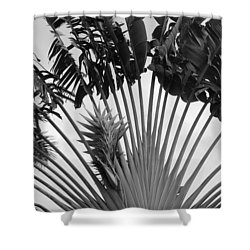 Palm Frons Shower Curtain by Rob Hans