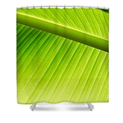 Palm Leaf Background Shower Curtain