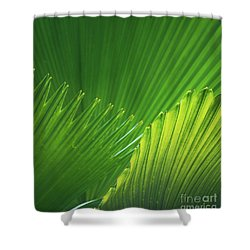 Palm Leaves Shower Curtain by Atiketta Sangasaeng