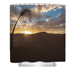 Palm On Dune Shower Curtain