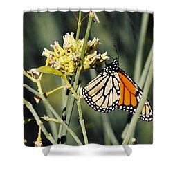 Shower Curtain featuring the photograph Palm Springs Monarch by Kyle Hanson