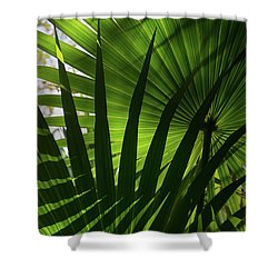 Palm Study 1 Shower Curtain