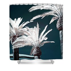 Palm Tree Blues In Sorrento Shower Curtain by John Rizzuto
