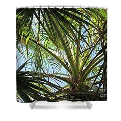 Palm Tree In Fuengirola Shower Curtain
