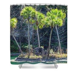 Palm Tree Island Shower Curtain