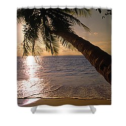 Palm Tree Over The Beach In Costa Rica Shower Curtain