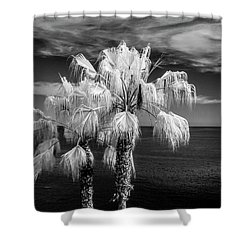Shower Curtain featuring the photograph Palm Trees At Laguna Beach In Infrared Black And White by Randall Nyhof