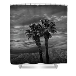 Shower Curtain featuring the photograph Palm Trees By Borrego Springs In Black And White by Randall Nyhof
