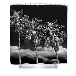 Shower Curtain featuring the photograph Palm Trees In Black And White On Cabrillo Beach by Randall Nyhof