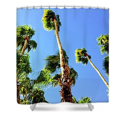 Palm Trees Looking Up Shower Curtain