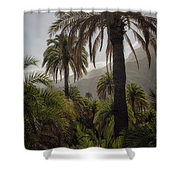 Palm Trees Shower Curtain by Patricia Hofmeester