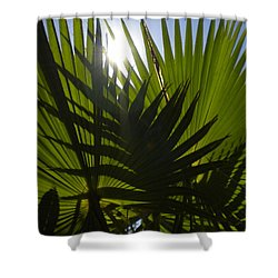 Shower Curtain featuring the photograph Palmetto 3 by Renate Nadi Wesley