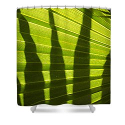 Shower Curtain featuring the photograph Palmetto 4 by Renate Nadi Wesley