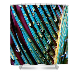 Palms After A Rainy Day Shower Curtain by Mariola Bitner