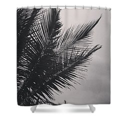 Palm Trees  Against A Stormy Sky Shower Curtain by Colleen Kammerer