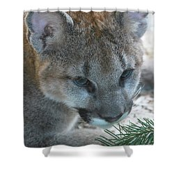 Shower Curtain featuring the photograph Palus by Laddie Halupa