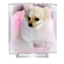Pampered Pomeranian  Shower Curtain