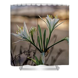 Pancratium Maritimum L. Shower Curtain