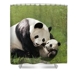 Panda Bears Shower Curtain
